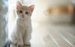家中养猫需要注意什么?